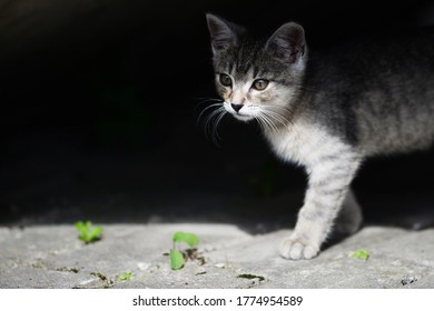 adorable young cat playing in fresh air