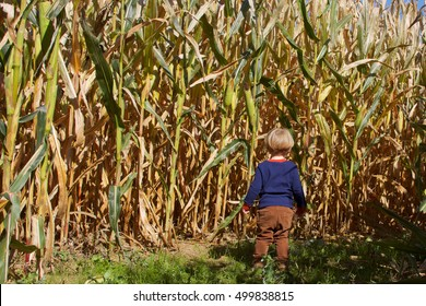 adorable young toddler boy standing in corn field maze on farm in fall autumn season