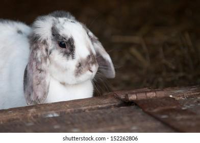 adorable young white bunny rabbit