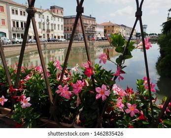 Adria, Italy. Ponte Castello bridge with flowers. Dipladenia plants.