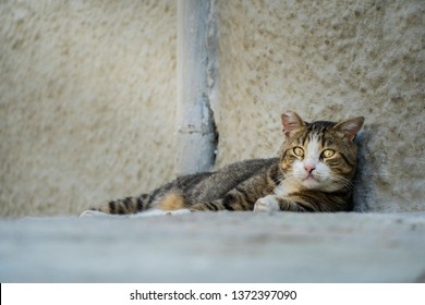 Adult abandoned stray cat looking sad at the camera. The tip of the right ear cut off is a sign for being neutered or spayed and returned in the territory. Adopt don't shop, spay and neuter concepts