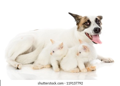 adult big dog and two kittens. isolated on white background