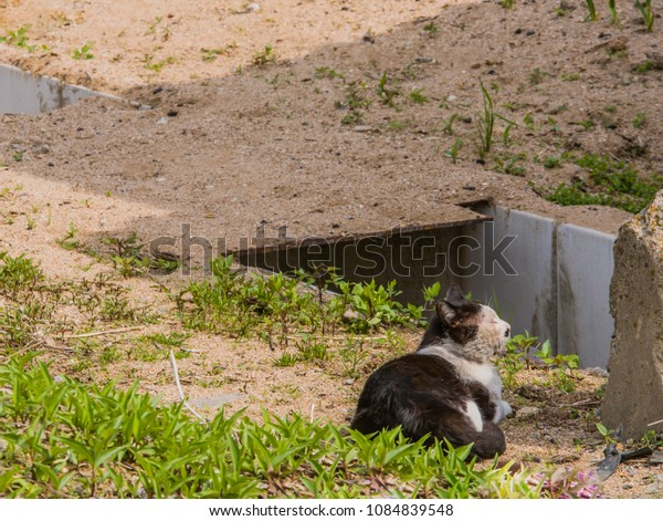 Adult black and white cat laying in sun near concrete wall on sunny morning.