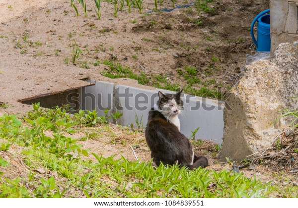 Adult black and white cat sitting in sun near concrete wall on sunny morning.