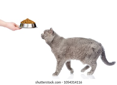 Adult cat feeding with dry food. isolated on white background