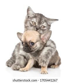 Adult cat hugs tiny chihuahua puppy. Isolated on white background.