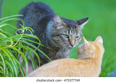 An adult cat looking at a younger cat