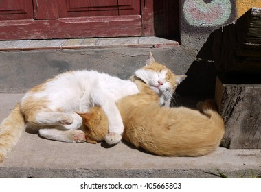 Adult Cat and Orange Kitten Hugging Each Other While Basking in Warm Sunlight on Door Step of Home in Copacabana, Bolivia