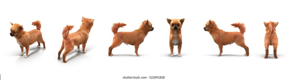 adult chihuahua renders set from different angles on a white. 3D illustration