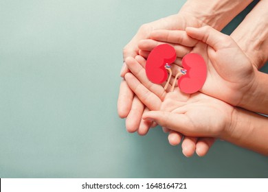 Adult and child holding kidney shaped paper on textured blue background, world kidney day, National Organ Donor Day, charity donation concept - Shutterstock ID 1648164721