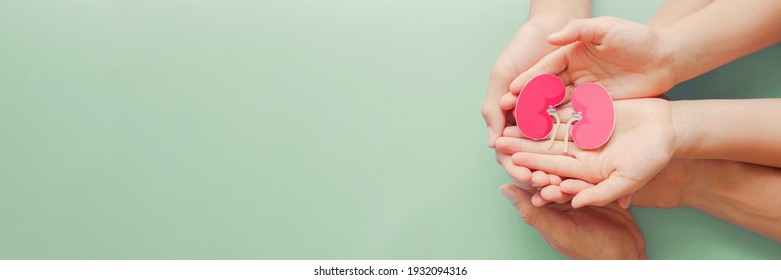 Adult and child holding kidney shaped paper on textured blue background, world kidney day, National Organ Donor Day, charity donation concept - Shutterstock ID 1932094316