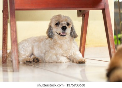Adult cute dog