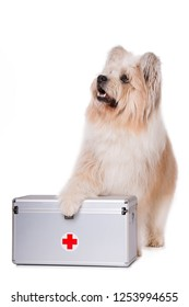 Adult elo dog with first aid suitcase isolated on white background