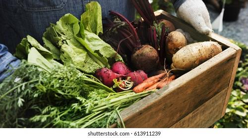 Adult Farmer Man Holding Fresh Local Organic Vegetable