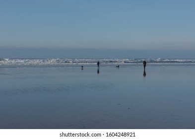 Adult Female and Young Boy Walking Three Dogs by the Breaking Waves of the Atlantic Ocean on a Sunny Winter Day on Summerleaze Beach in the Seaside Town of Bude in Cornwall, England, UK
