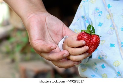adult gives a child red strawberries