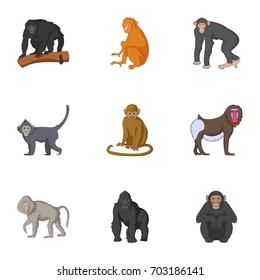 Adult individuals of monkeys icons set. Cartoon set of 9 adult individuals of monkeys  icons for web isolated on white background