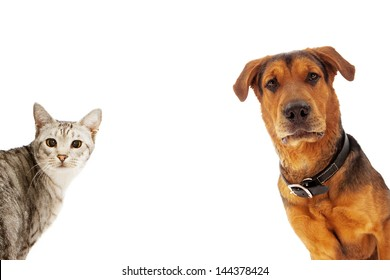 An adult large breed dog and a silver cat coming into the sides of an image with room for text