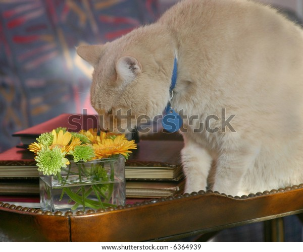 Adult male cat smelling flowers