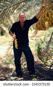 Adult man holds dates in his hands in the summer on a sunny day. Israel Lake Galilee. Growing date trees agro culture. Healthy eating healthy fruits. A bunch of date fruits. Man portrait full growth