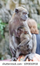 An adult monkey and her child at the Batu Caves in Kuala Lumpur