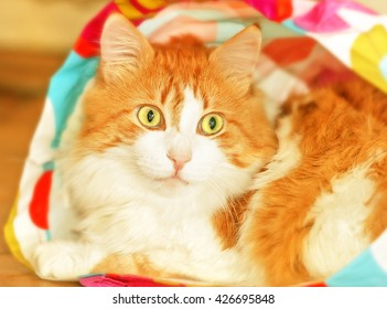 Adult nice red cat in bag like surprise