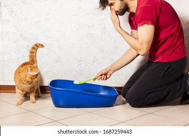 Adult person's hand removing and cleaning cat litter box from clumps of cat urine and feces