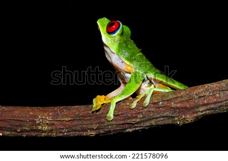 Babes Costa Rica