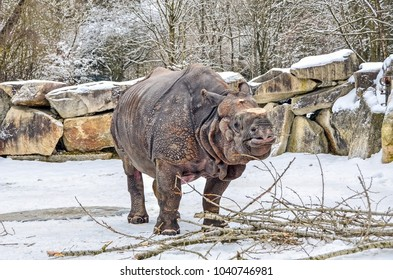 Adult Rhino at zoo in a snowy day