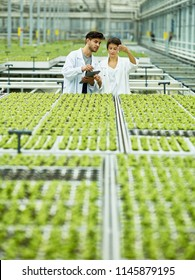 Adult woman and man with tablet checking green sprouts in modern greenhouse of agricultural complex using lab tool