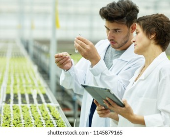 Adult woman and young man in white gown exploring soil and plants in agricultural complex using tablet