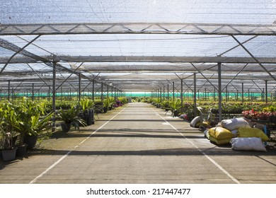 Advanced greenhouse with colorful flowers ready for harvest.