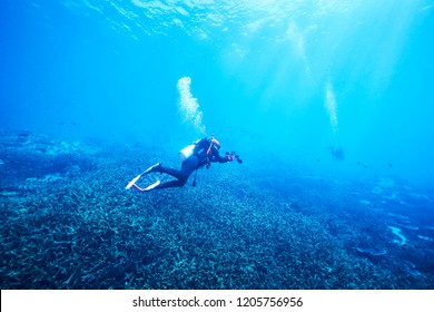 adventure underwater with the best diving spot at Losin south of Thailand