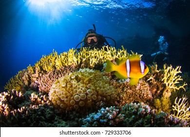 Adventure while diving. Beautiful colorful reefs of the Red Sea. Ras Mohammed. Egypt, Red Sea.