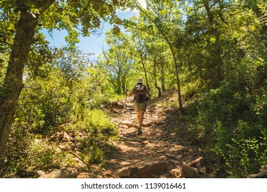Adventurer girl hiking in a forest surrounded by beautiful green tropical trees in the middle of the day, in summer