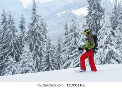 Adventurer struggles through the deep snow in snowshoes among huge pine trees covered with snow on the winter morning. Epic winter travel in the mountains.