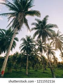 Adventuring in Belize