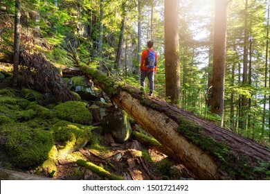 Adventurous Man hiking on a fallen tree in a beautiful green forest during a sunny summer evening. Taken in Squamish, North of Vancouver, British Columbia, Canada.