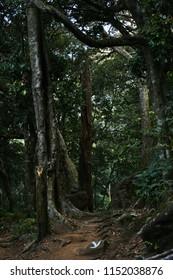 """Adventurous trekking trail of Agasthyamala forest, Trivandrum, Kerala"""