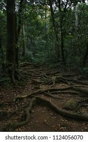 Adventurous trekking trail of Agasthyarkoodam trekking program.