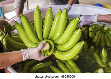 Advertise, Best fruit, Health, Business concept - Farmer wears gloves washed green banana in a big water container during the packing process.