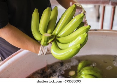 Advertise, Best fruit, Health, Business concept - Bananas washed in a large water tank during harvest and packing.