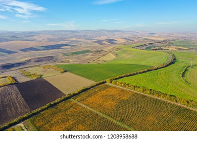 Aerial agricultural landscape. Plantation field ready for harvest. Above view from a drone
