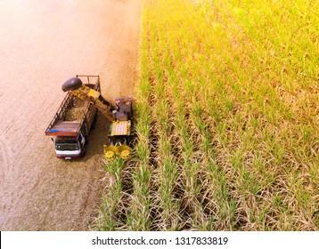 Aerial angle for farming, harvesting sugar cane