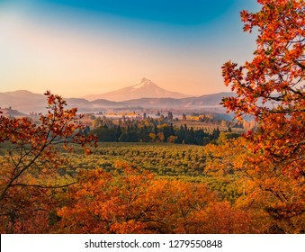 Aerial autumn sunrise over orchards and vineyards, Mt Hood in the distance