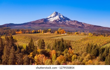 Aerial autumn view of Mt Hood, snow cap, orchards, trees, sun, blue sky