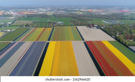 Aerial bird view photo of Lisse tulip fields located in the western part of The Netherlands in the province of South Holland at about 25 miles from Amsterdam showing beautiful colorful flowers below
