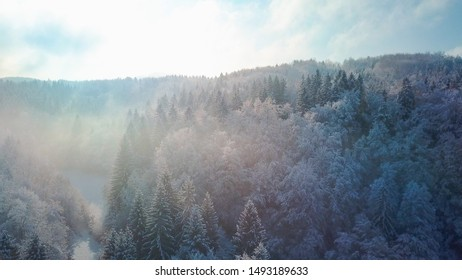 AERIAL CLOSE UP Flying above frozen treetops in snowy spruce forest on misty morning. Golden sun rising behind icy mixed forest covered in early morning fog in cold winter. Stunning winter landscape