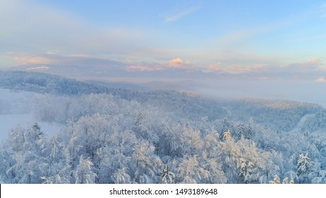 AERIAL CLOSE UP Flying above frozen treetops in snowy spruce forest on misty morning. Golden sun rising over icy mixed forest covered in morning fog and snow in cold winter. Stunning winter landscape