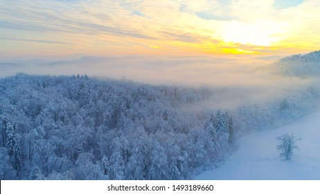 AERIAL CLOSE UP Flying over frozen treetops in snowy mixed forest at misty sunrise. Golden sun rising behind icy mixed forest covered in morning fog and snow in cold winter. Stunning winter landscape